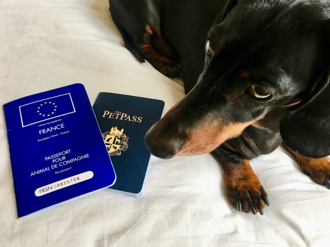 dogs pet passports