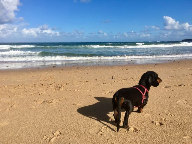dog-friendly beach wollongong