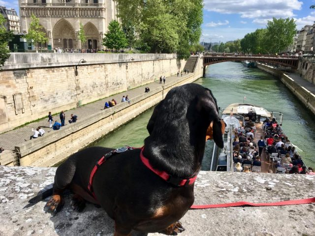 taking my dog to france from uk
