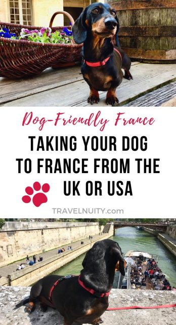 Taking a Dog to France