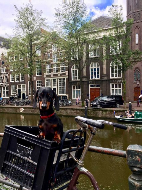 Travelling to the Netherlands with a dog