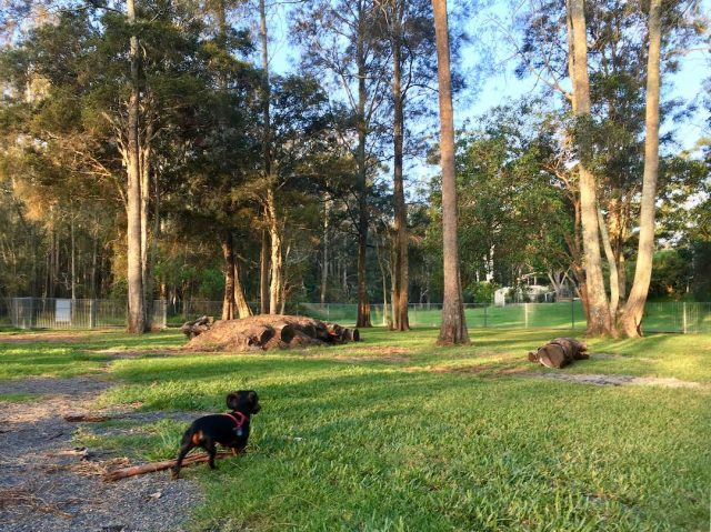 Dog-friendly caravan park Forster-Tuncurry