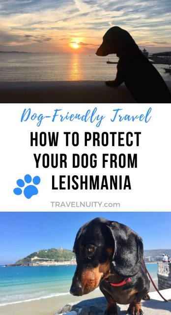 Protect Your Dog From Leishmania