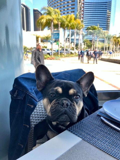 Visiting San Diego with a dog