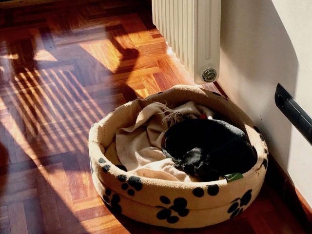 Wondrous 9 Tips For Staying In A Pet Friendly Airbnb With Your Pet Creativecarmelina Interior Chair Design Creativecarmelinacom