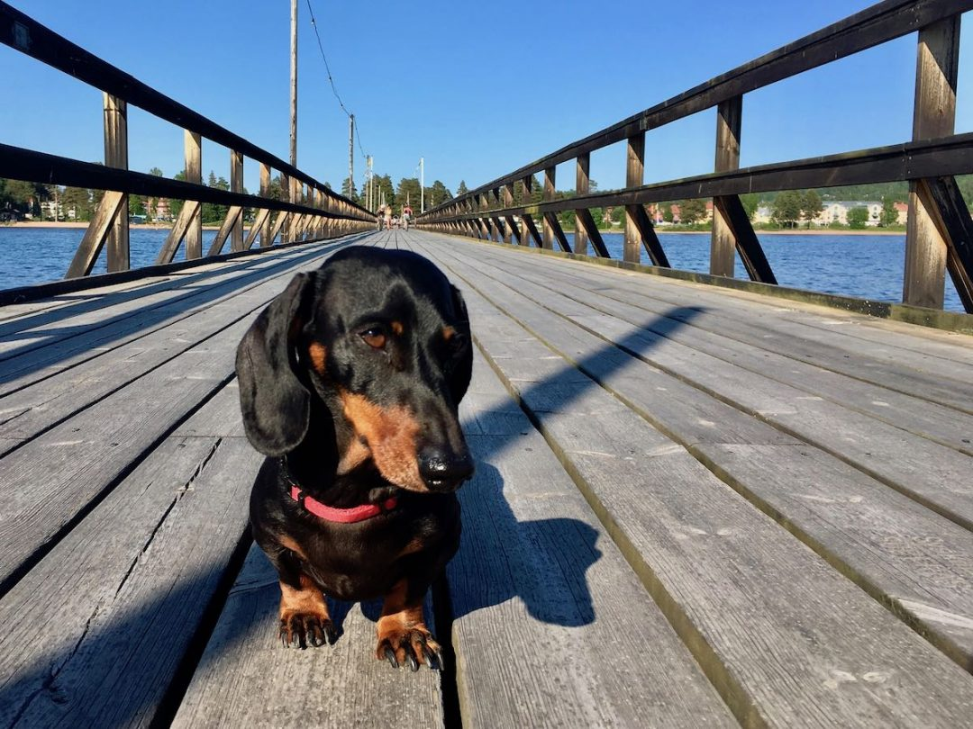 Dog-friendly Sweden