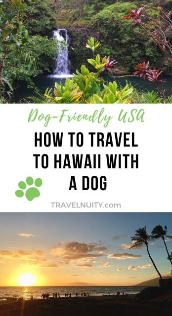 Travel to Hawaii with dog