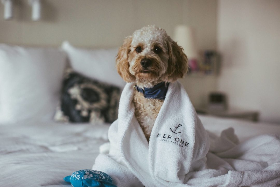 Dog-friendly luxury hotels Australia