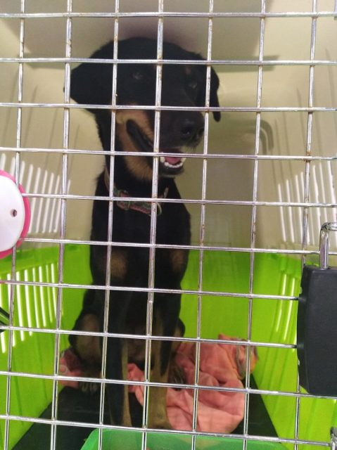 Pet crate for air travel