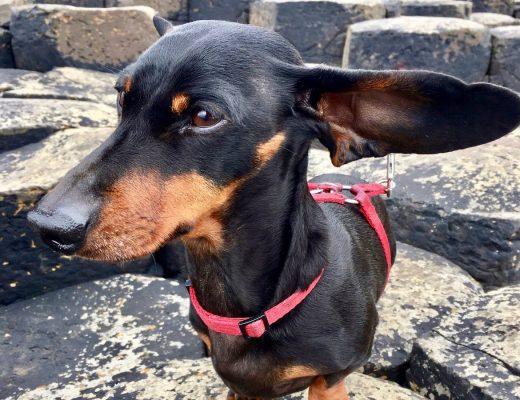 Taking dog to Northern Ireland