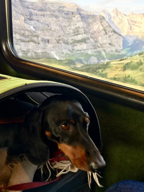 Dog on trains in Europe