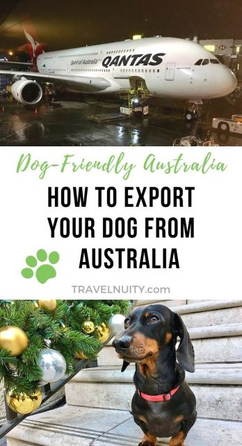 Exporting a Dog From Australia pin