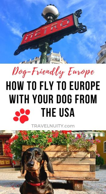How to Fly to Europe with Your Dog from the USA