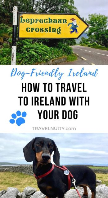 How to Travel to Ireland with Your Dog RED