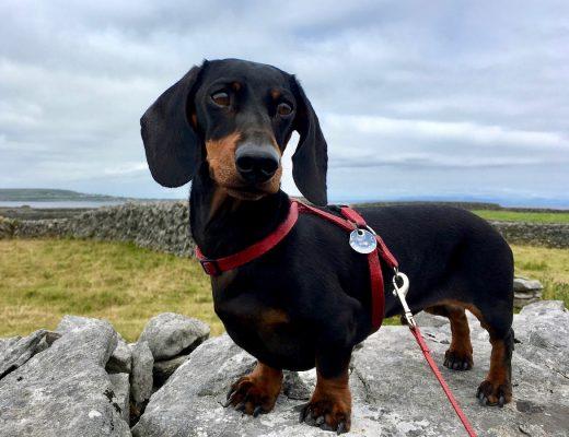 Taking a dog to Ireland