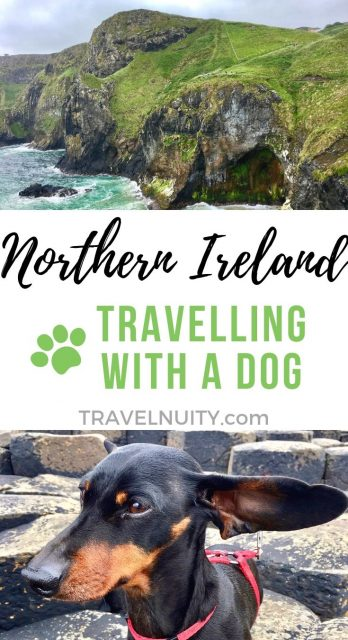 Taking a dog to Northern Ireland
