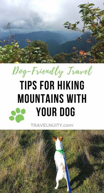 Tips for hiking mountains with your dog pin