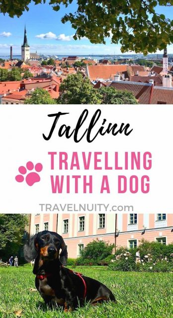 Tallinn dog-friendly travel