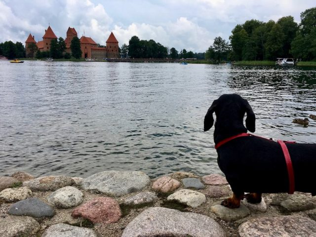 Dog-Friendly Lithuania: Travelling in Lithuania with a Dog
