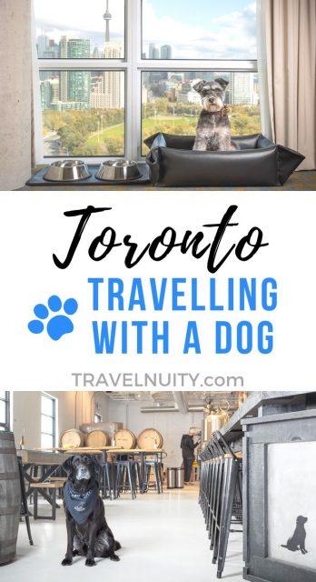 Dog-friendly Toronto